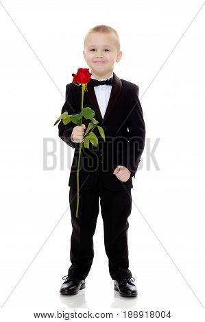 Beautiful little boy in a strict black suit , white shirt and tie. Boy holding a flower of a red rose on a long stem. Isolated on white background.