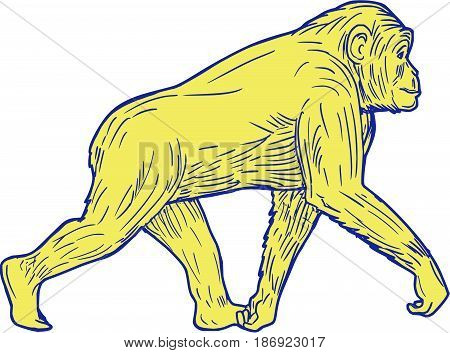 Drawing sketch style illustration of a chimpanzee walking viewed from the side set on isolated white background.