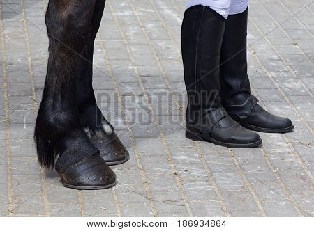 black hooves with horseshoes and equestrian chaps
