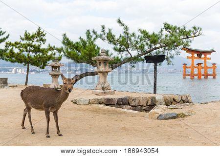 Itsukushima Shrine and deer
