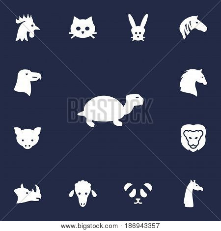 Set Of 13 Alive Icons Set.Collection Of Wildcat, Lamb, Bunny And Other Elements.