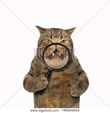 The cat is holding a magnifying glass. White background.