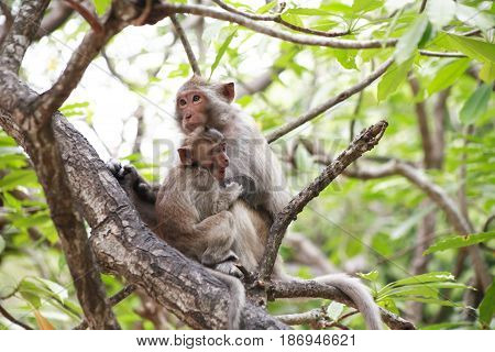 Small wild monkey with mother sitting on tree twig