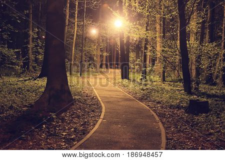Wagging path in the night park illuminated by lanterns. Landscape of a path between trees in the park at night.