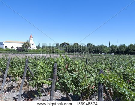 Wine Industry In Maule Valley, Chile
