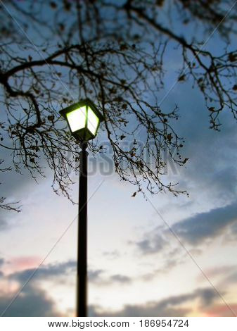 morning lamp light and dawning sky under the branch