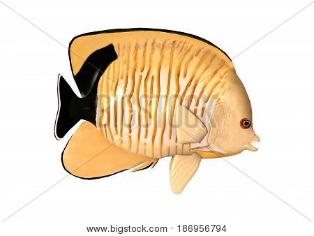 3D Rendering Blacktail Angelfish On White