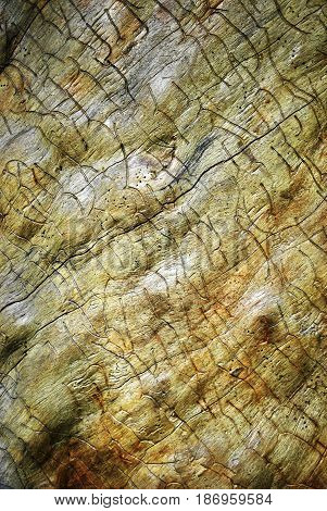 Grunge rough sawn wood board panel background with warm colors