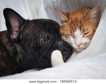 Cute dog and cat lie together snugly