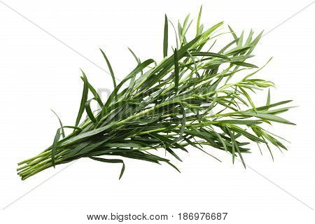 Bundle Of Tarragon Artemisia Dracunculus, Paths