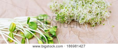 Mixed organic micro greens on craft paper. Fresh sunflower and heap of alfalfa micro green sprouts for healthy vegan food cooking. Healthy food and diet concept. Cut microgreens, top view, banner for website