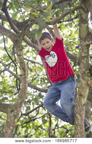 Hispanic boy playing in tree