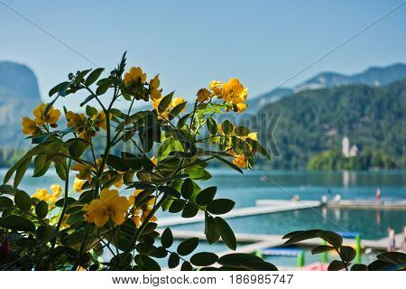 Yellow flowers at lake Bled with church on a small island in background, Slovenian alps, Slovenia
