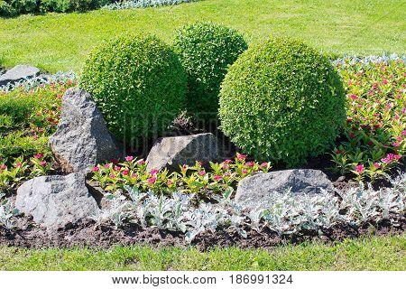 Park with bushes and stones. Landscape design