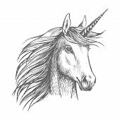 Unicorn horse animal vector sketch. White mythical heraldic isolated horse head with long horn. Mythic symbol of fantasy horse for fairytale story or fantasy design poster