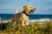 Exciting puppy jumping in the grass next to the beach poster