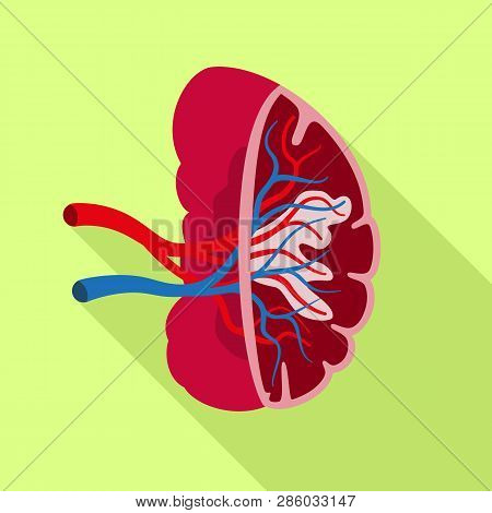 Healthy Spleen Icon. Flat Illustration Of Healthy Spleen Vector Icon For Web Design