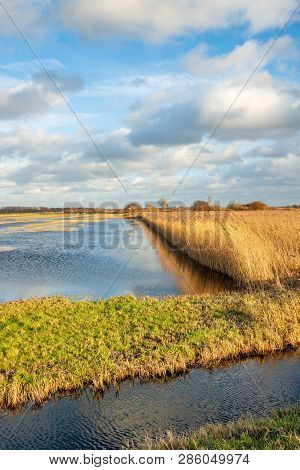 Yellowed Reeds Reflected In The Water Of A Flooded Part Of A Dutch Polder. It Is At The End Of A Sun