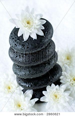 Flower Above Stones