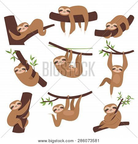 Sloth On Branch. Cute Little Kid Sleepy Animal On Branch In Zoo Playing With Baby Hanging Vector Cha
