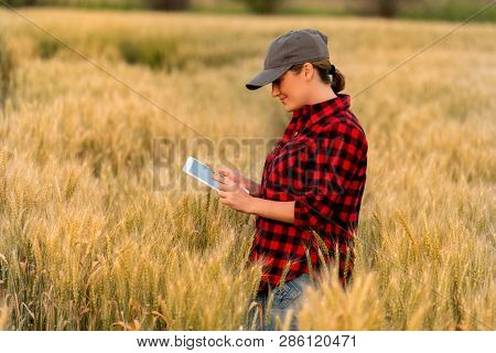 A Woman Farmer Examines The Field Of Cereals And Sends Data To The Cloud From The Tablet. Smart Farm