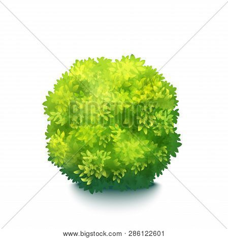 Vector Realistic Fresh Green Garden Bush Isolated On White