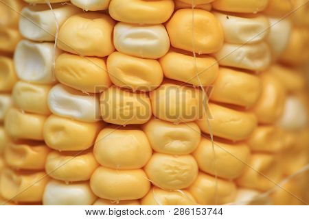 The Yellow Of Corn With Back Ground