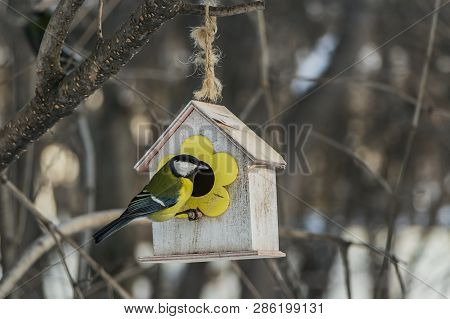 A small yellow tit sits on a yellow bird and squirrel feeder house from plywood in the park poster
