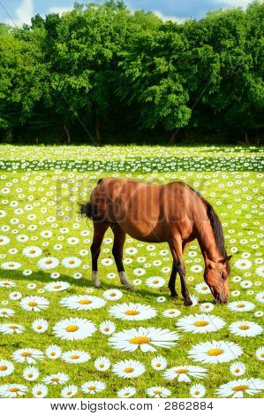 Rural scene with horse on a flower meadow fantasy montage poster