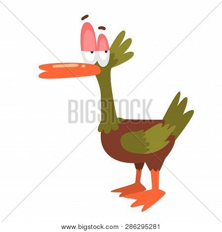 Self Confident Male Mallard Duck, Funny Bird Cartoon Character Vector Illustration