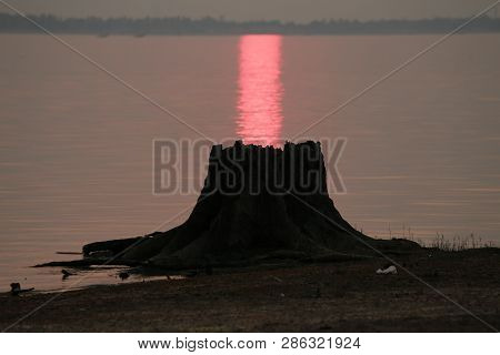 Tree Stump Branches At River And Sunset,stumps Of Felled Trees By The River In Thailand.