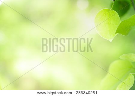 Closeup Beautiful View Of Nature Green Leaf On Blurred Greenery Tree Background With Sunlight In Gar