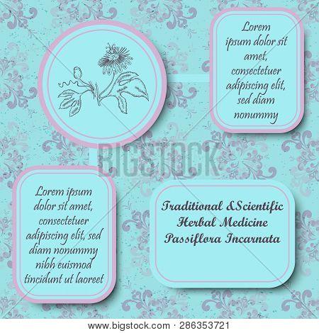 Inforgraphic Board For Traditional And Scientific Herbal Medicine Study. Passiflora Incarnata Common