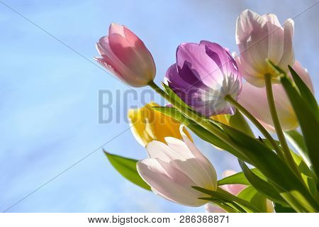Bouquet Of Beautiful Tulips And Blue Sky