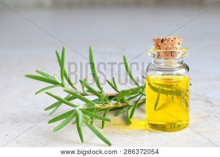 Rosemary Essential Oil In A Small Bottle And Fresh Twig On Light Background. Natural Aroma Cosmetic