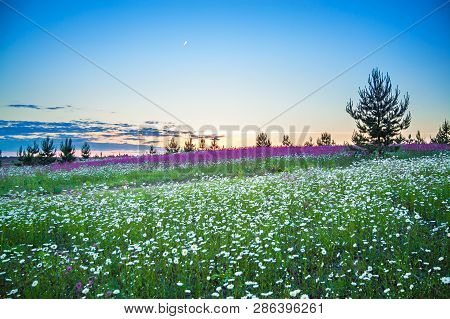 Beautiful Spring Night Landscape With Blooming Wild Flowers In Meadow. Summer Field With Flowering W