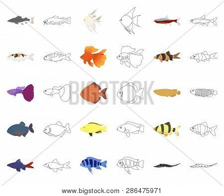Different Types Of Fish Cartoon, Outline Icons In Set Collection For Design. Marine And Aquarium Fis