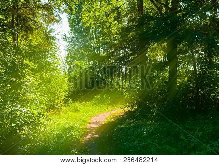 Forest spring landscape - forest trees with grass on the foreground and sunlight shining through the forest trees. Sunny colorful forest nature, sunset in the spring forest. Forest spring landscape scene