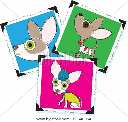 Chihuahua Photographs