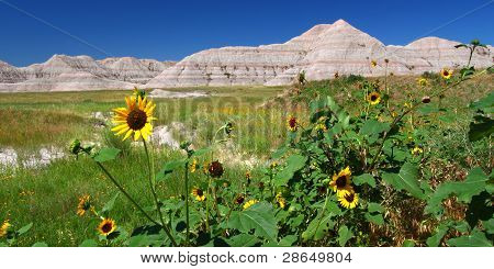 Wildflowers amid the arid landscape of Badlands National Park - South Dakota. poster
