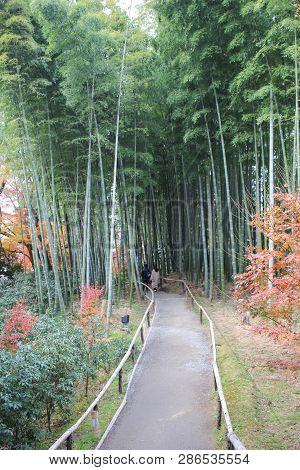 The Bamboo Forest In Kodai Ji Temple In Kyoto