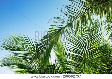 Palm Leaf On Sky Background. Blue Green Tropical Nature Photo. Sunny Tropic Paradise Banner Template