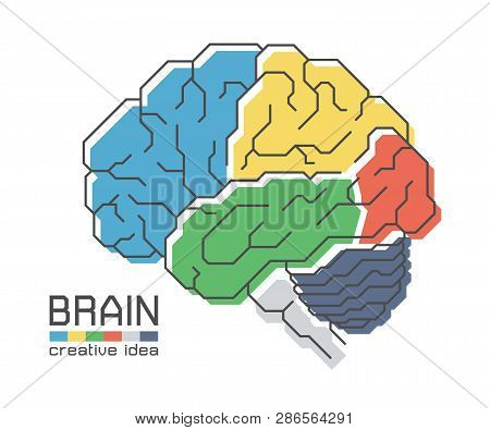 Brain Anatomy With Flat Color Design And Outline Stroke . Frontal Parietal Temporal Occipital Lobe C