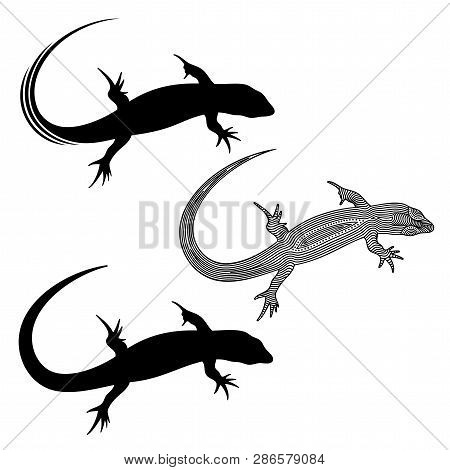 74b3e1eab86da Vector Illustration Of Decorated, Stylized, Outline , Isolated Lizard And  Lizards Silhouette In Blac
