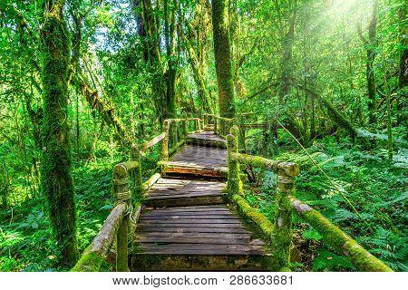 Ang Ka Nature Trail In Doi Inthanon National Park , Chiang Mai , Thailand.
