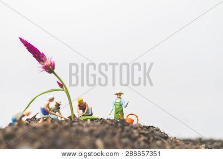 Miniature People , Gardeners Take Care Growing Plants  In The Field