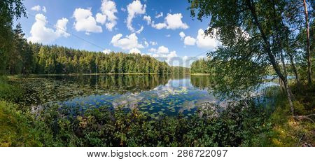 Blue sky with clouds reflecting in calm water of summer lake in a boreal forest, Panoramic view with birch trees and water lilies seen in foreground