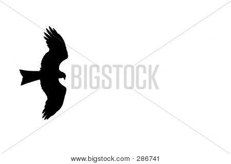 Spreading Bird