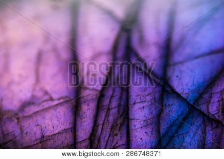 Multicolored Background Of A Macro Detail Of A Labradorite With Blurr