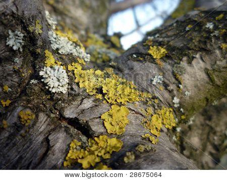 Moss On A Tree.
